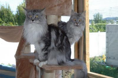 Boarding cattery - CAT HOTEL